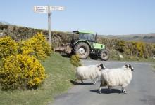 Rural Roads: The Dangers